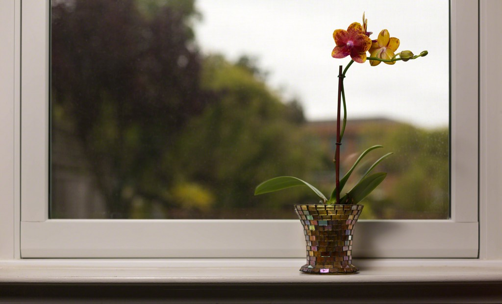 orchid_window