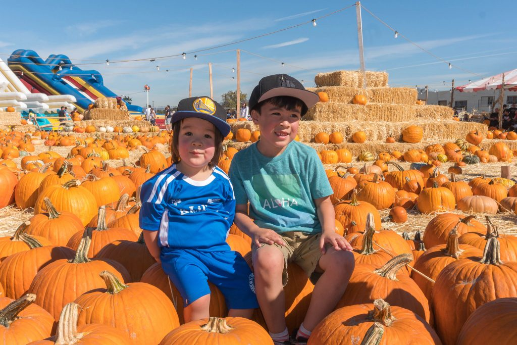 pumpkin_patch_09